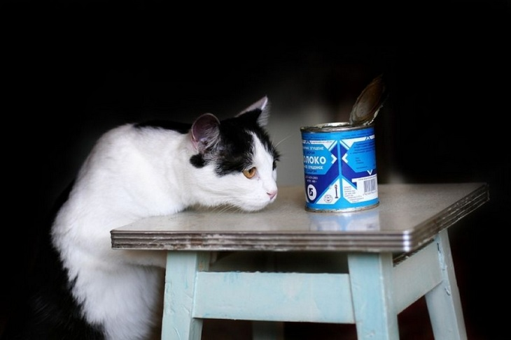 Сгущенное молоко для кошек