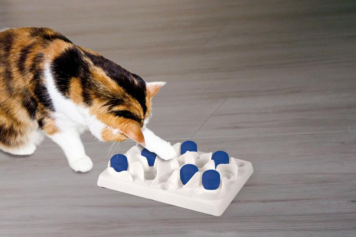 Игры с котом, чтобы не скучал