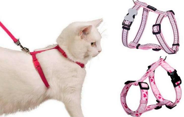 Шлейка для кошки: фото как одеть